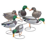 Gunner Hd Mallard, Full Body Field 6 Pack Starter Pack